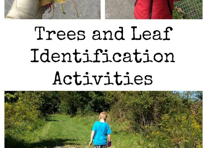 Trees and Leaf Identification Activities {#NatureBookClub}